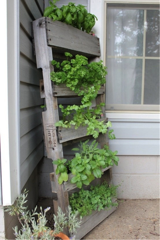 Growing Herbs On Apartment Balcony Image And Attic