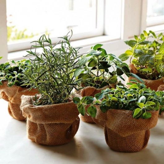 How to Grow Herbs Through the Winter | St. Albans
