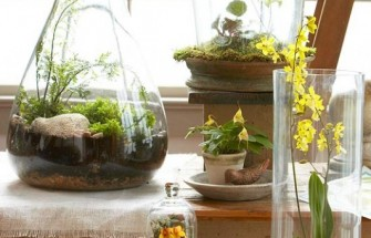 Better Homes & Gardens | Top Terrarium Plants
