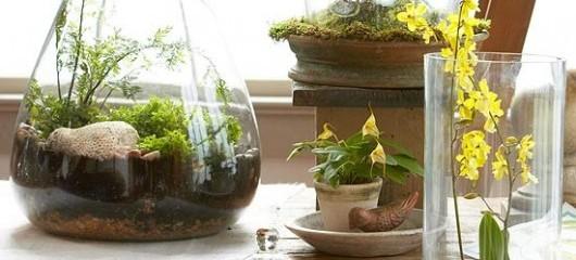 Better Homes & Gardens | Top Terrarium Plants