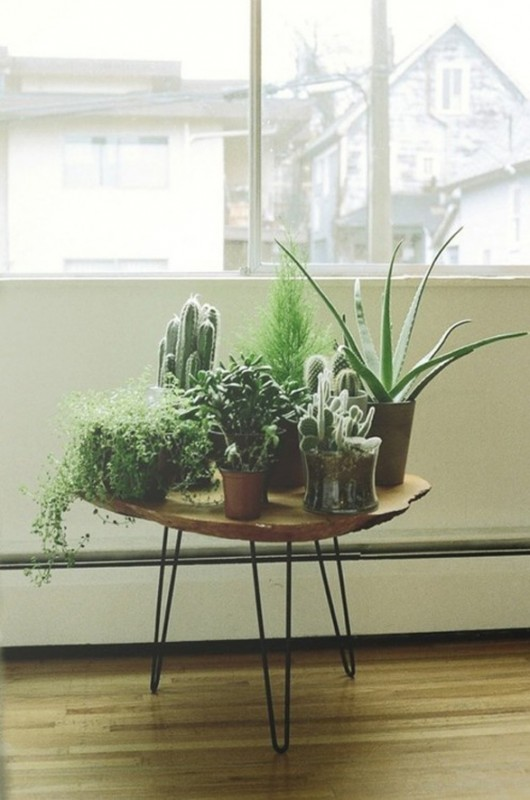 Checks and Spots | Inspiration: Decorating with Indoor Plants