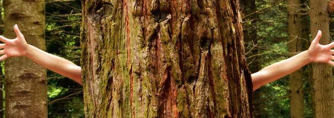 Eco-Friendly tree hugger