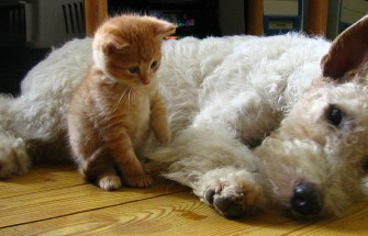 Kitten and dog lounging together
