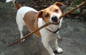 dog on a stick