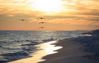 Sunset birds beach