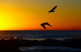 ocean birds sunset