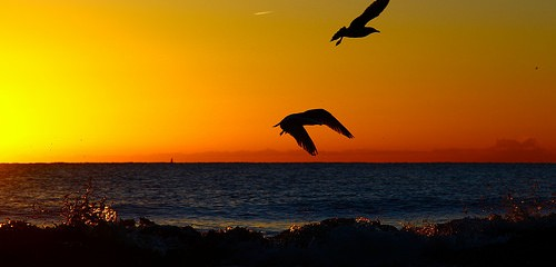 ocean birds sunset
