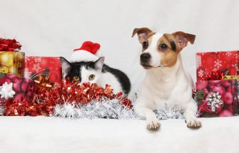 Dog with Christmas Decorations